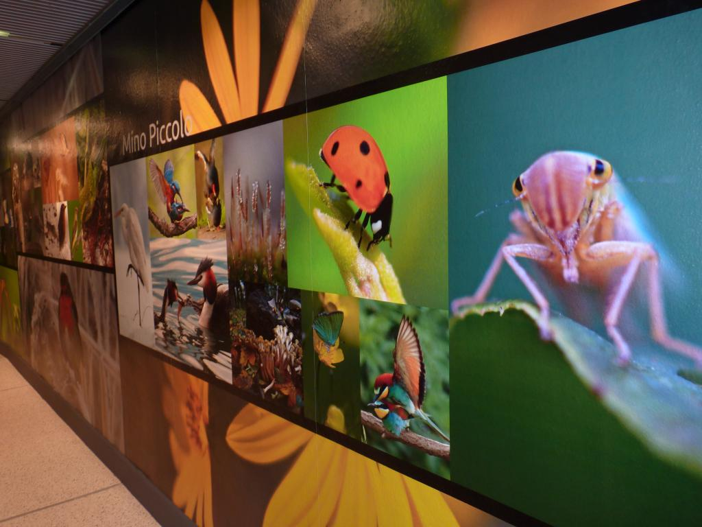 Visit the Museum of Natural History